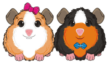 287 Guinea Pigs Stock Vector Illustration And Royalty Free Guinea ...