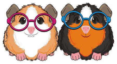 Zwei Meerschweinchen in Gläsern sitzen