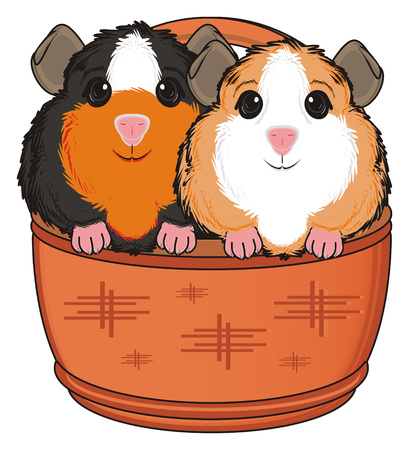 two guinea pigs sit on the basket Stock Photo