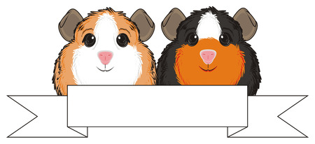guinea pig: two guinea pigs peek up from clean ribbon
