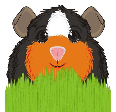 guinea pig: guinea pig stick out from grass