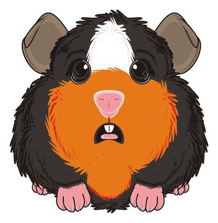 surprise guinea pig sit