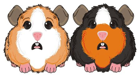 two guinea pigs sit with opened mouth