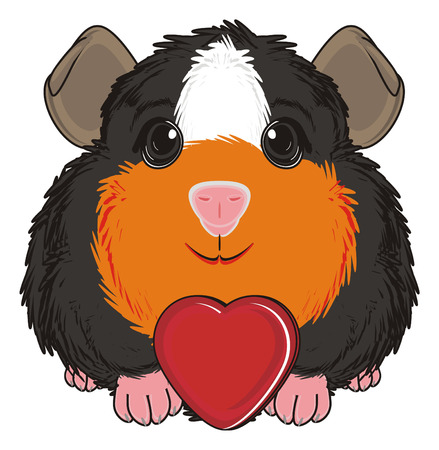 guinea pig: guinea pig sit with red heart