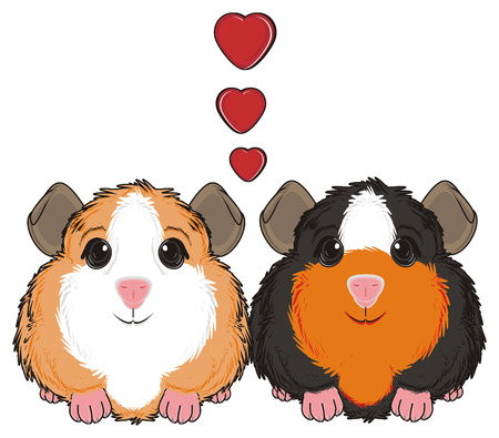 guinea pig: two guinea pigs sit around of many red hearts Stock Photo