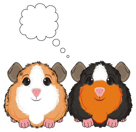 two guinea pigs with clean callout