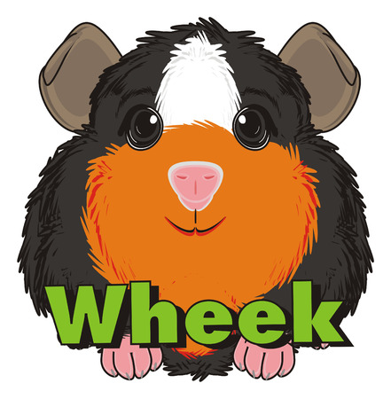 guinea pig: guinea pig sit with word wheek