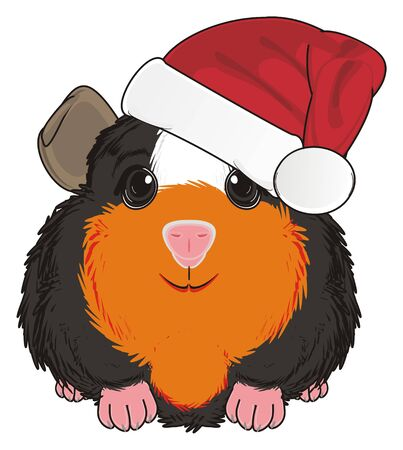 guinea pig in red hat sit