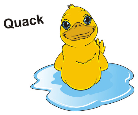 duck swimming and say quack Stock Photo