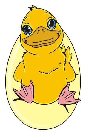 membranes: duck stand inside of broken egg Stock Photo