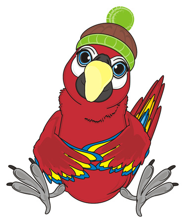 red parrot in winter hat sit Stock Photo