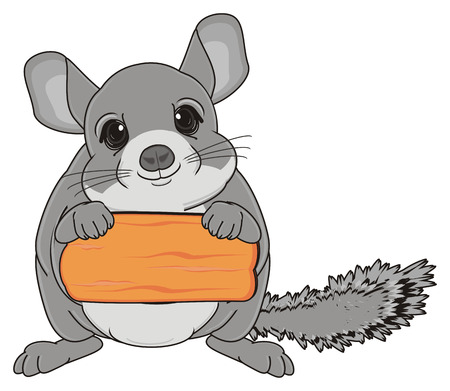 chinchilla stand and hold clean wooden plate