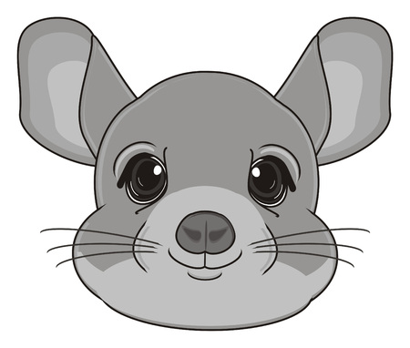 snout: snout of chinchilla Stock Photo