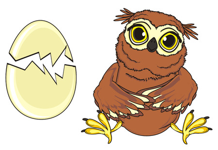 broken eggs: owl sit with broken egg
