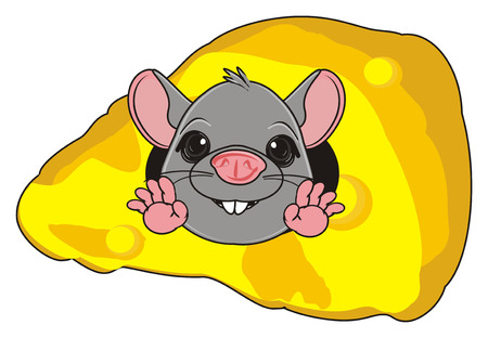 the wrecker: snout of gray rat peek up from cheese