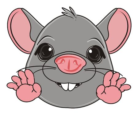 snout: snout of gray rat