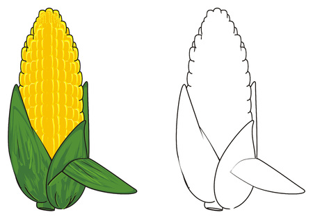 corne: colored corn and coloring corn