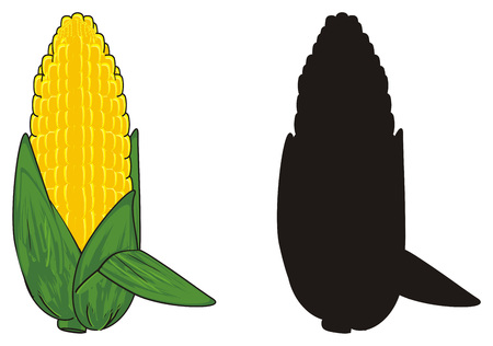 colored corn with solid black corn