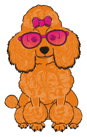 Orange poodle girl with pink bow and sunglasses sit
