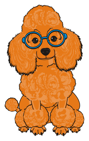 Orange poodle in blue round glasses sit