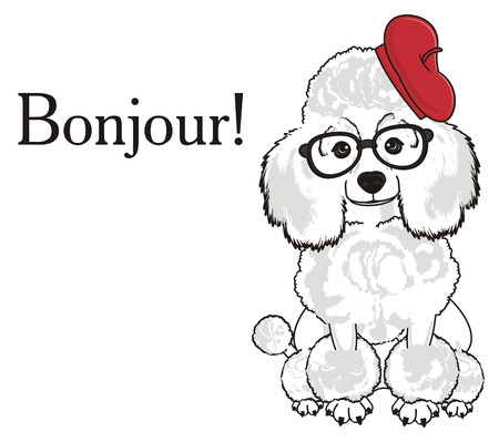 White poodle in red beret and black glasses sit with word bonjour