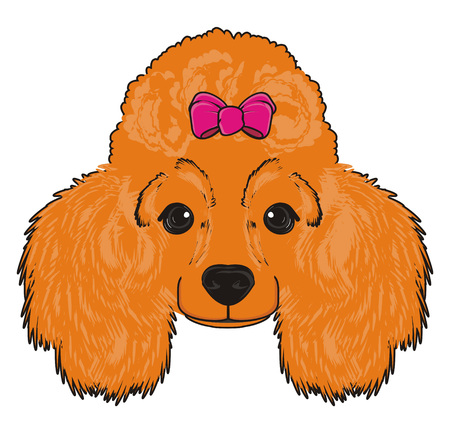 Snout of orange poodle girl with pink bow