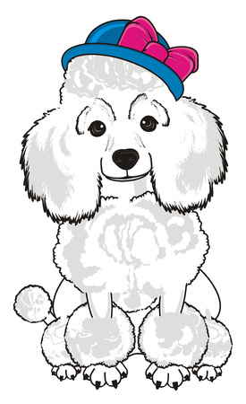 White poodle girl in blue hat with pink bow sit