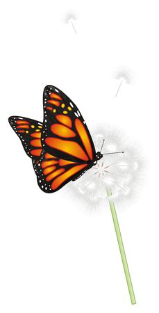 Butterfly sit on the dandelion Stock Photo