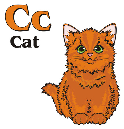 Orange cat with abc Stock Photo