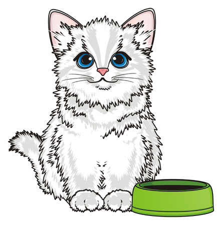 White cat sit with clean bowl