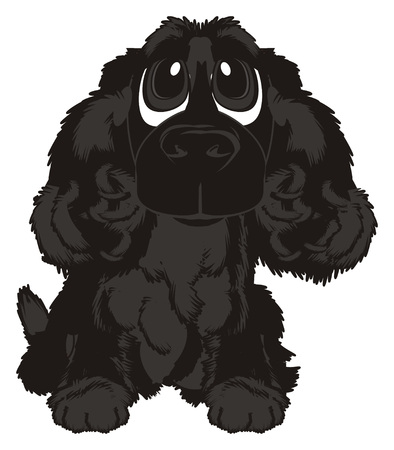 curly tail: Black spaniel sit