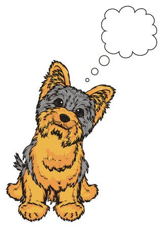 hair style: Yorkshire terrier sit under the clean callout Stock Photo