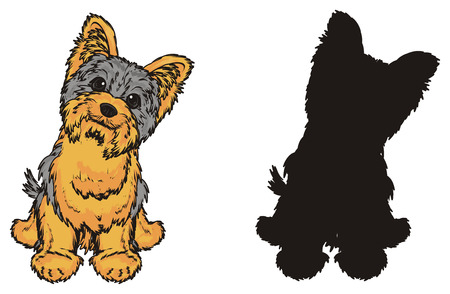 Colored yorkshire terrier sit with solid black yorkie