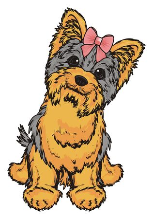 shaggy: Yorkshire terrier girl with pink bow sit Stock Photo