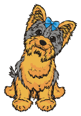 Yorkshire terrier with little blue bow sit