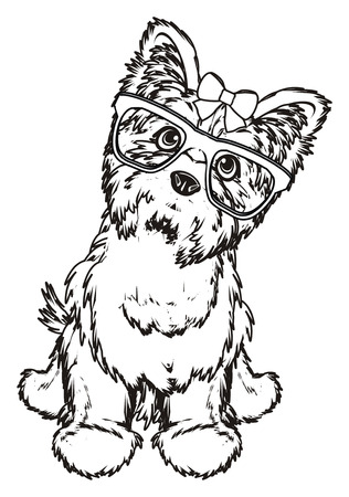 hair style: Coloring yorkshire terrier in glasses with a bow sit Stock Photo