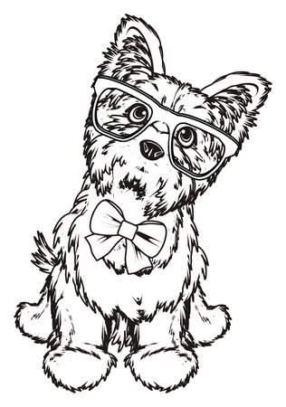 Coloring yorkshire terrier in glasses with a bow sit Stock Photo