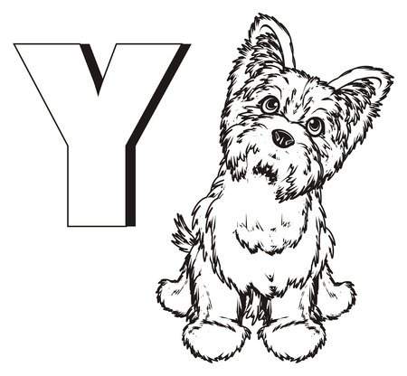 Coloring yorkshire terrier with letter y
