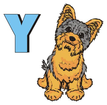 Yorkshire terrier sit with letter y Stok Fotoğraf