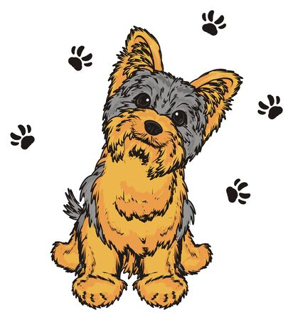 barking: Yorkshire terrier around of his many black footprints