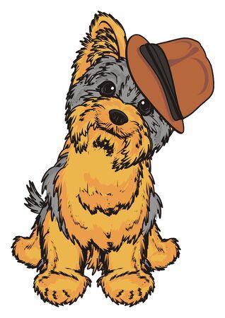 hair style: Yorkshire terrier boy in brown hat sit
