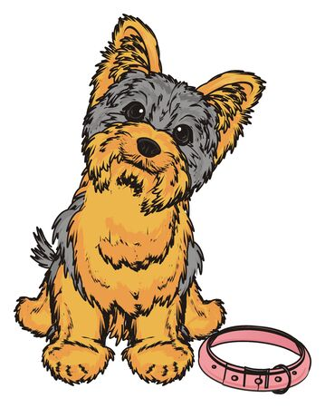 Yorkshire terrier girl with pink collar Stock Photo