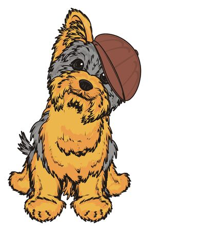 Yorkshire terrier in cap sit and watch