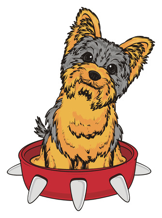 Yorkshire terrier and large red collar Stock Photo
