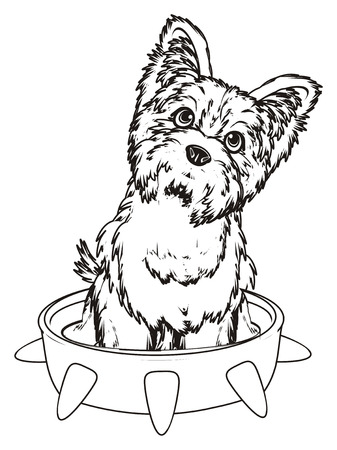 Coloring yorkshire terrier