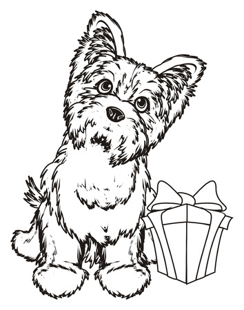 shaggy: Coloring yorkshire terrier with a gift Stock Photo