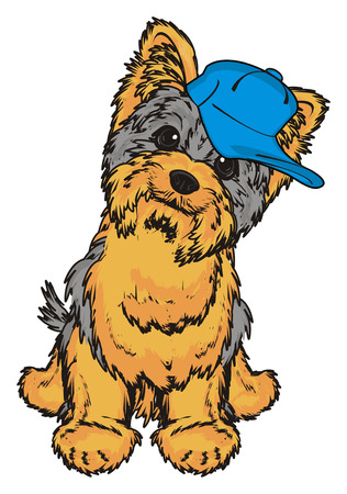 shaggy: Yorkshire terrier boy in blue cap sit