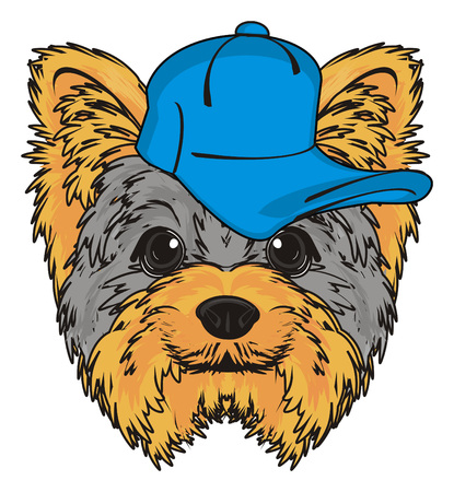 animal head: Snout of yorkshire terrier in blue cap