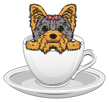 Snout of yorkshire terrier girl peek up from cup