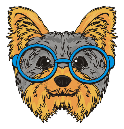 Muzzle of yorkshire terrier in glasses